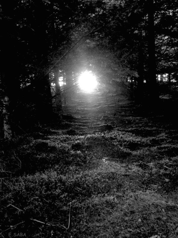 """""""le soleil a toujours raison"""" E.SABA"""